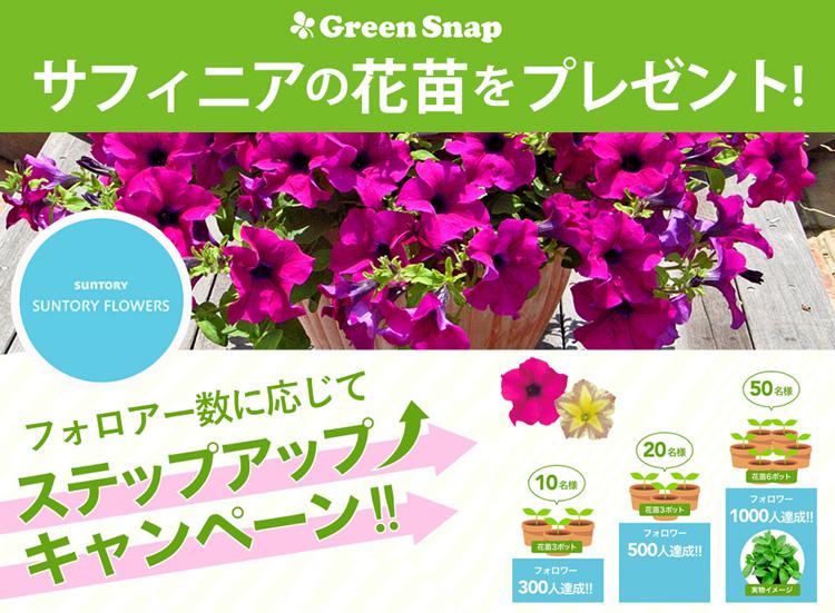 サフィニアの花苗が当たる!GreenSnap(グリーンスナップ)のステップアップキャンペーンがスタートしました。