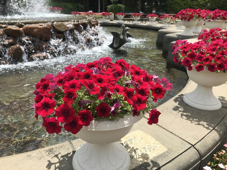 2020年6月、ふなばしアンデルセン公園でサントリーフラワーズのお花が咲き誇っています。