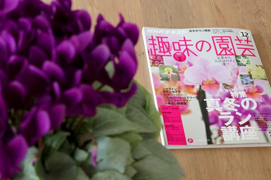 サントリーフラワーズの鉢花 セレナーディア、CCYT、プリンセチアが趣味の園芸2017年12月号に掲載されました。