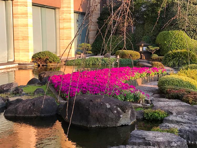 「セネッティ」がホテルニューオータニ(東京)に植栽された時の写真をご紹介します。