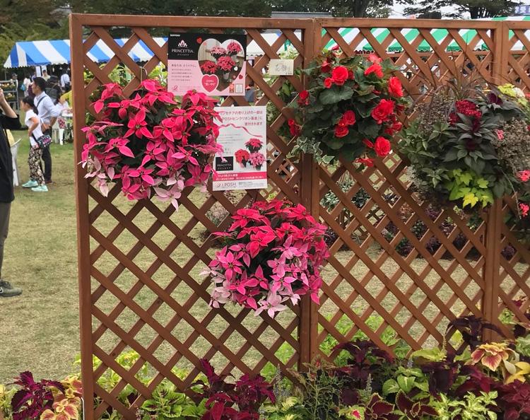 栃木県 宇都宮で開催された花と緑のフェスティバルで「プリンセチア」も使われました。