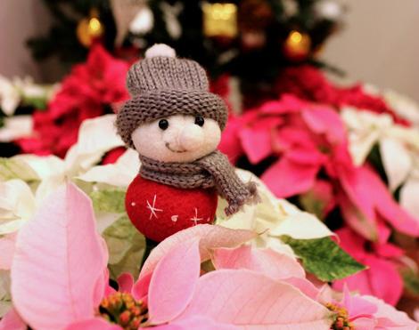 「プリンセチア」のクリスマス♪