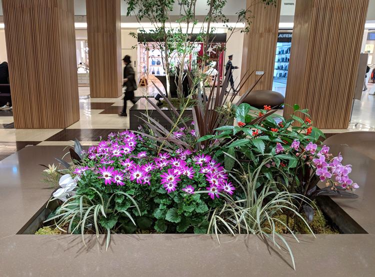 「セネッティ」が玉川高島屋S・C(東京都)にて飾られました。