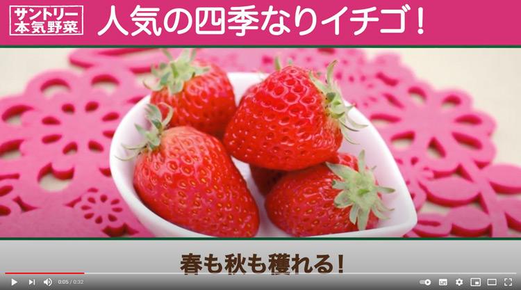 「本気野菜イチゴ苗」が2021年2月中旬より販売開始!イチゴ苗紹介動画も♪