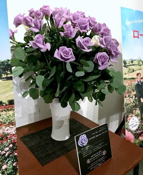 映画『ローズメイカー 奇跡のバラ』試写会にサントリーブルーローズ アプローズが飾られました。