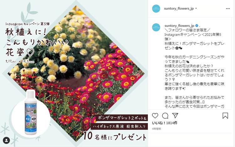 「ボンザマーガレット花苗&肥料」を抽選でプレゼント♪