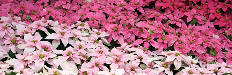 サントリーフラワーズ 公式ブログ 花とおしゃべりブログ