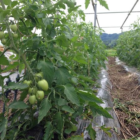 m.e.farm20140714_4.JPG