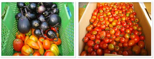 m.e.farm20140905.jpg