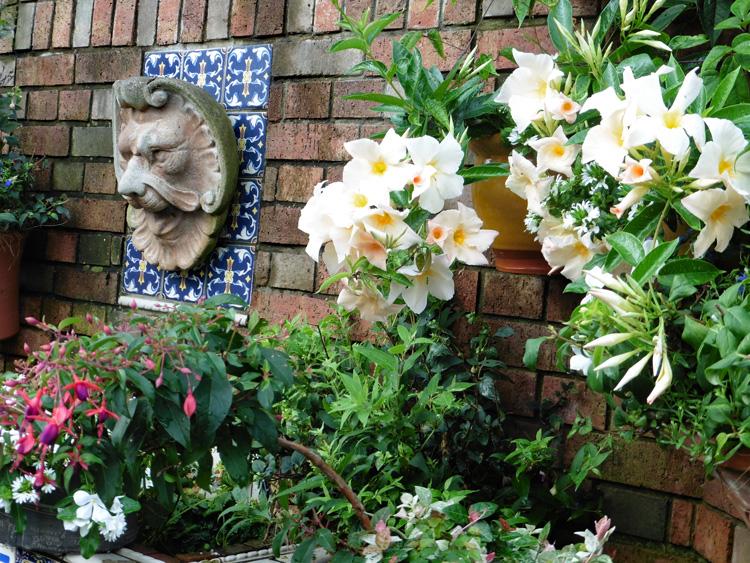 千葉県浦安市の城戸様よりサンパラソル、サンク・エール、エンジェルス・イヤリングの写真をいただきました。